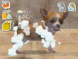 Nintendogs Dalmation and Friends for NINTENDODS to Rent